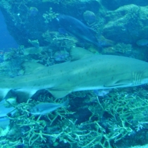 SDN2016_Dubai BJ Mall Aquarium  (15)