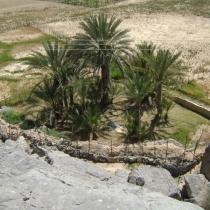 SDN2016_Kashab Oman (36)