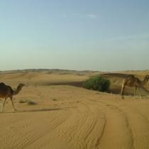 SDN2016_Wüsten Safari (50)